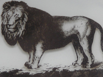LION SHARE